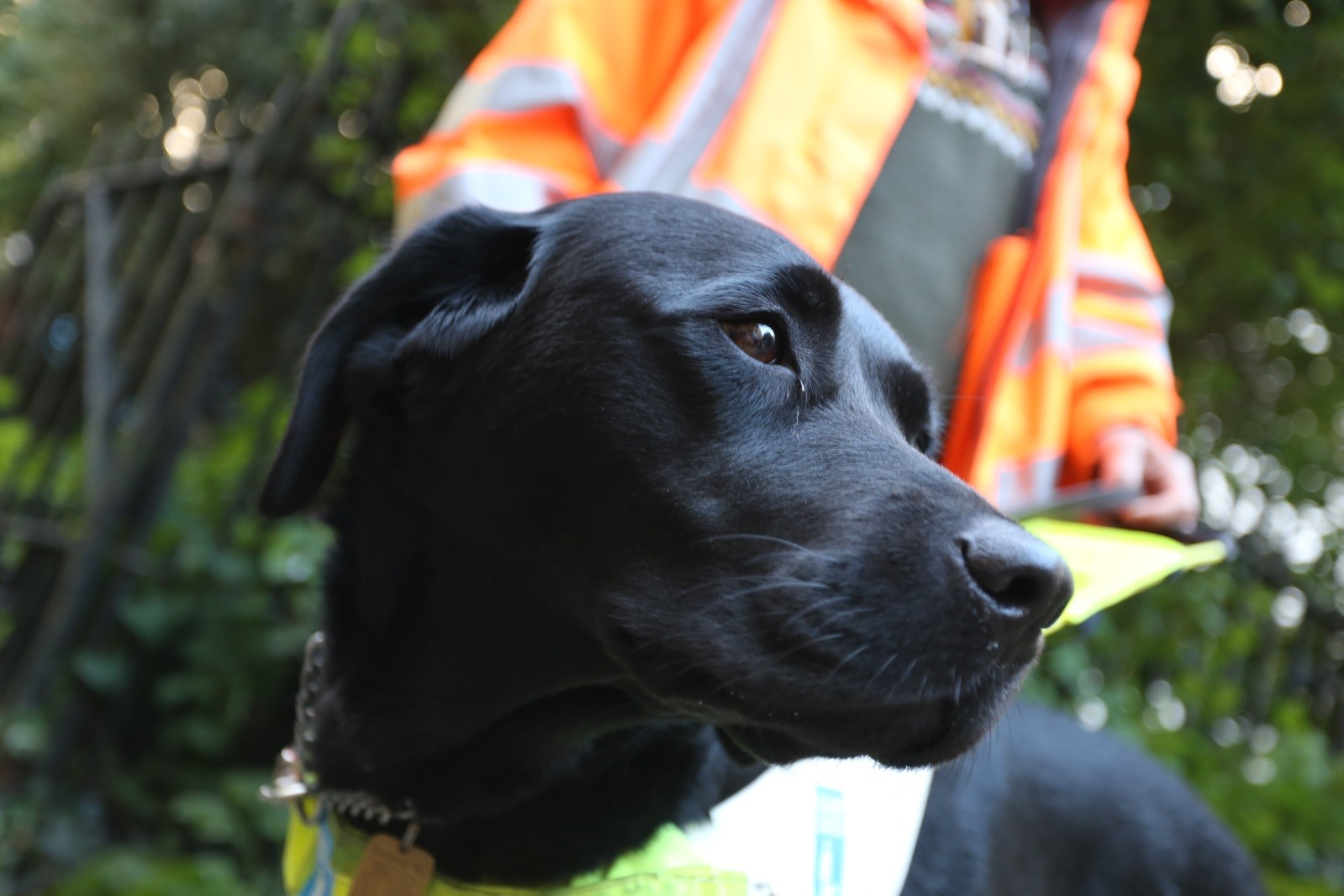 Coco the Guide Dog (Credit: George Reynolds � Ely Cathedral)
