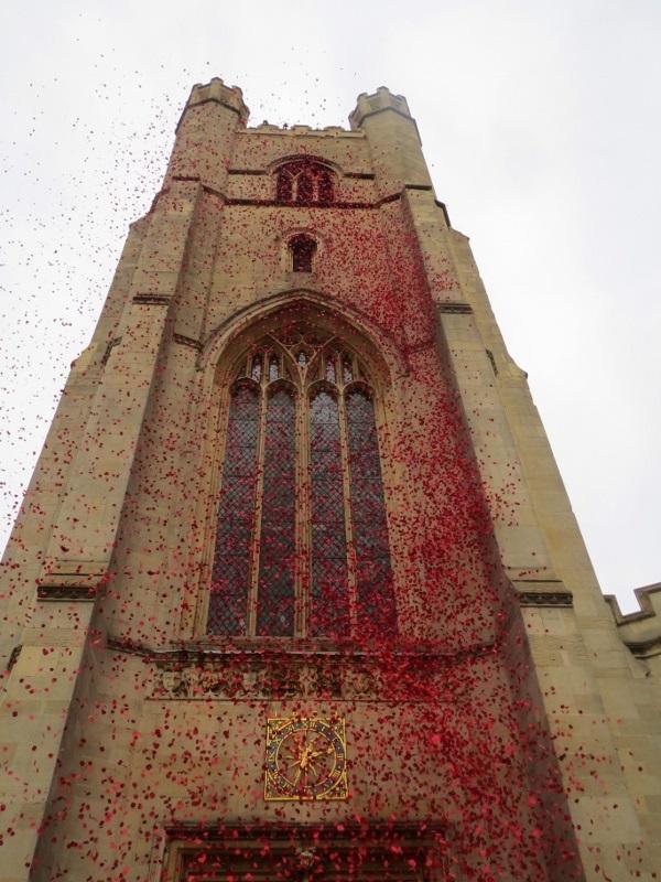 Raining Poppies